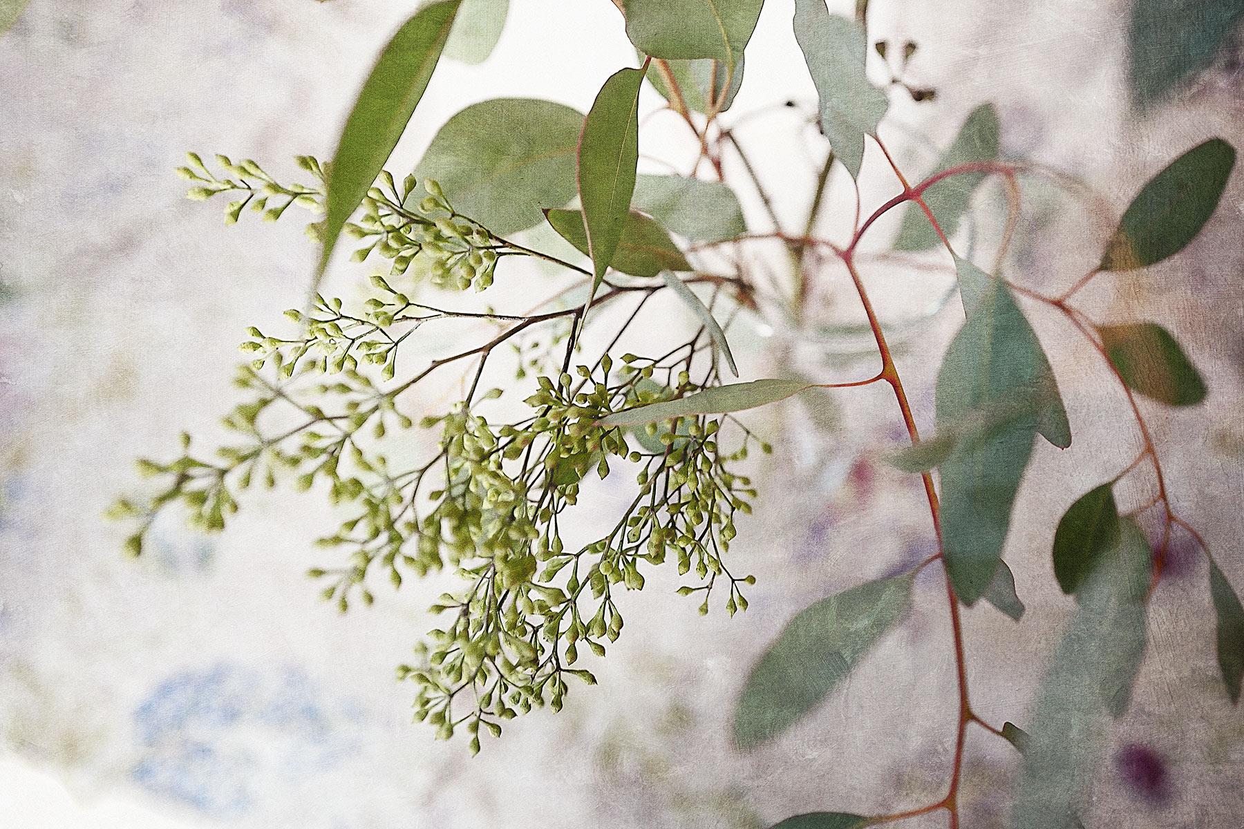 Botanical #L0173