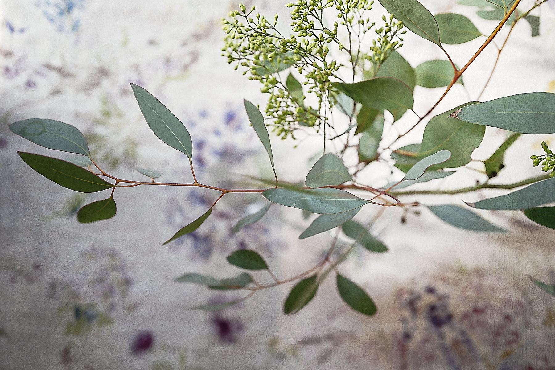 Botanical #L0175