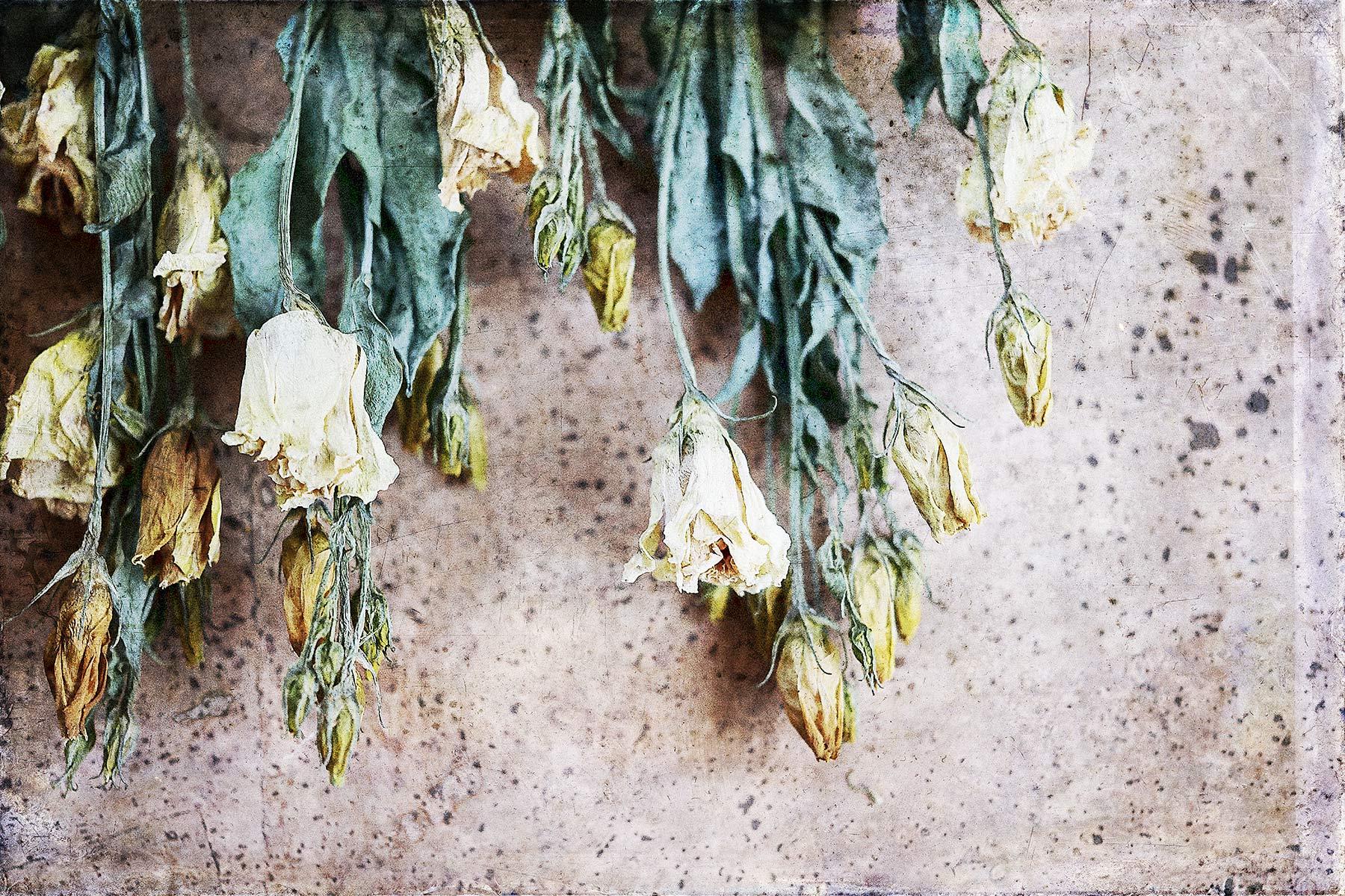 Botanical #DN50-1050