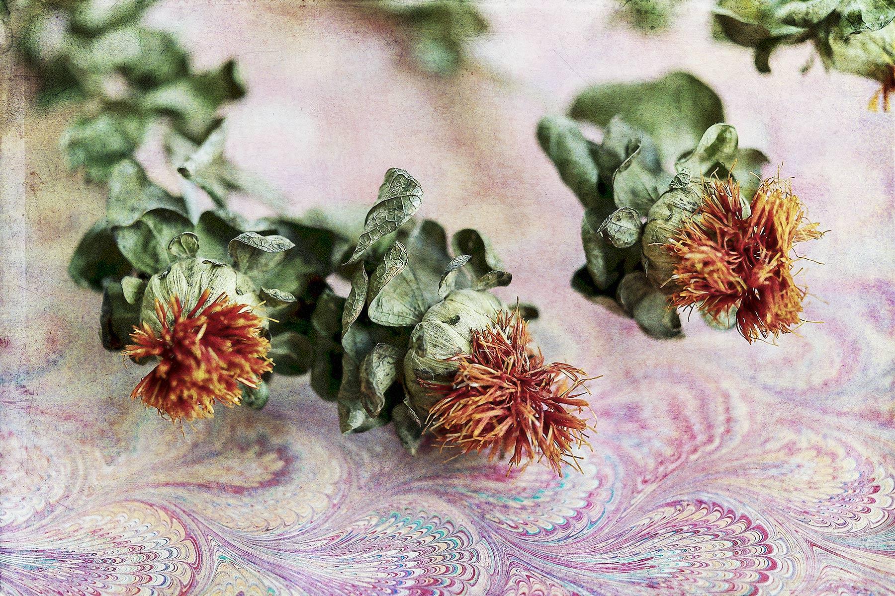 Botanical #D1012