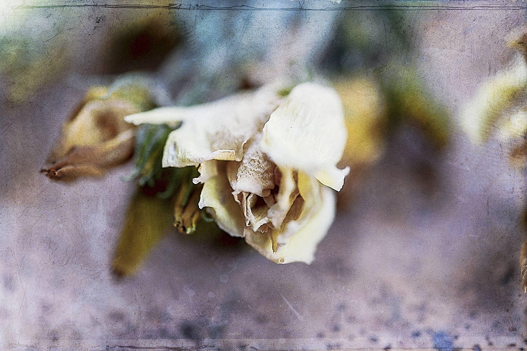 Botanical #D1060