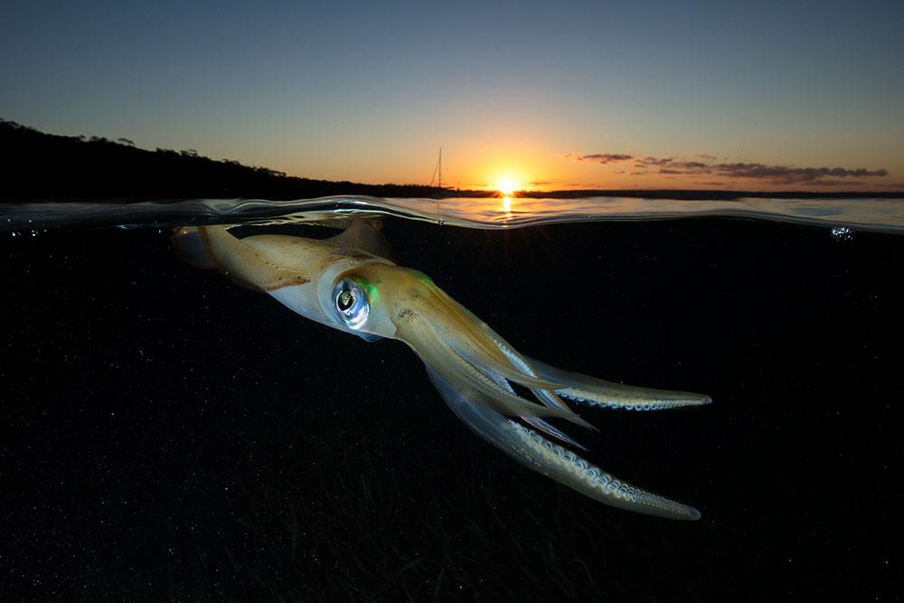 Sunset_Squid.jpg