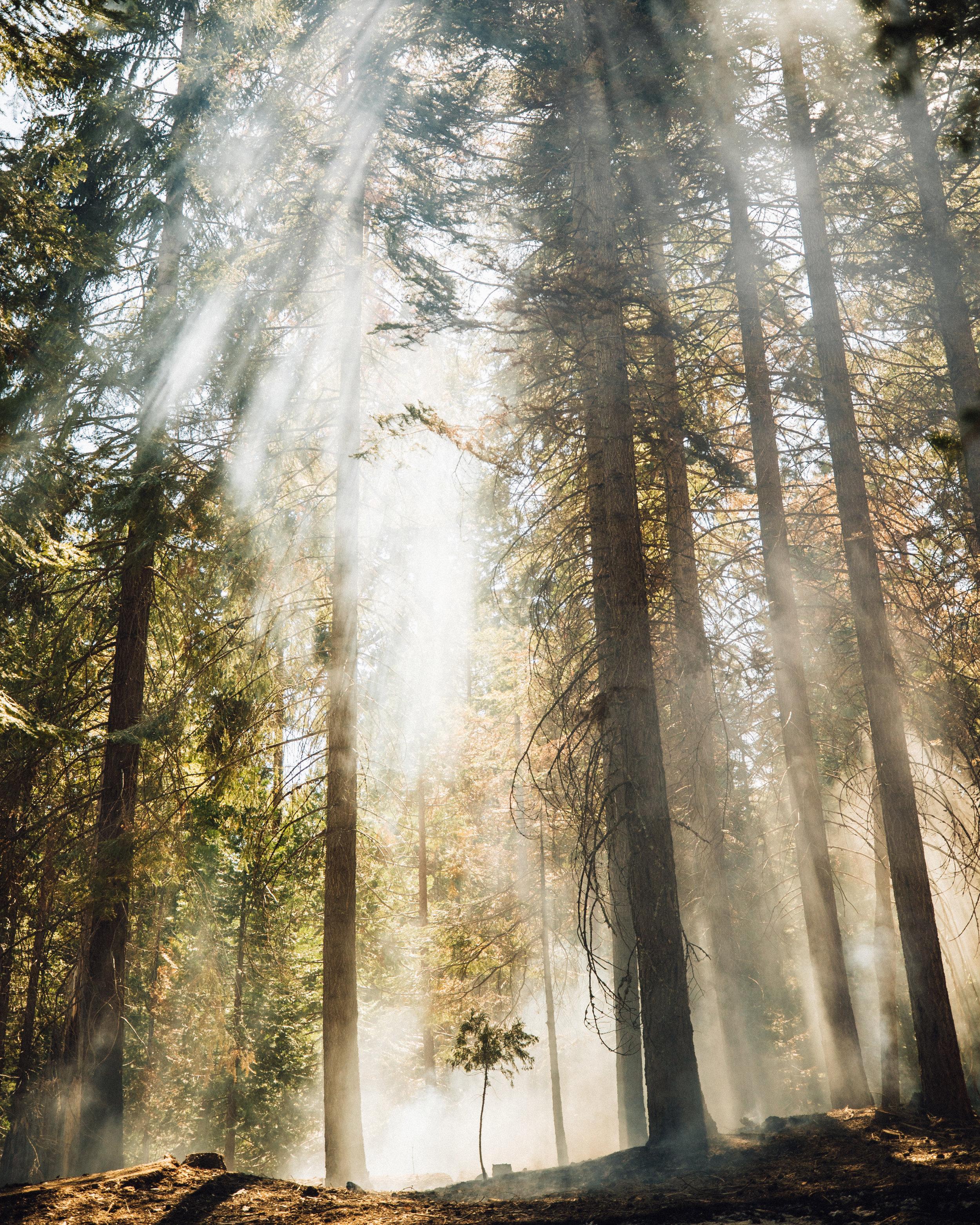 sequioa national forest.JPG