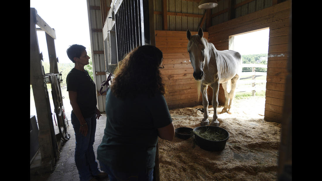 Director of Development Dawnn Double, left, and Executive Director Christine Hajek look in on Tonka, a male Percheron rescue from York County, Pa. being rehabilitated at Gentle Giants Draft Horse Rescue in Mount Airy Friday, July 13, 2018.