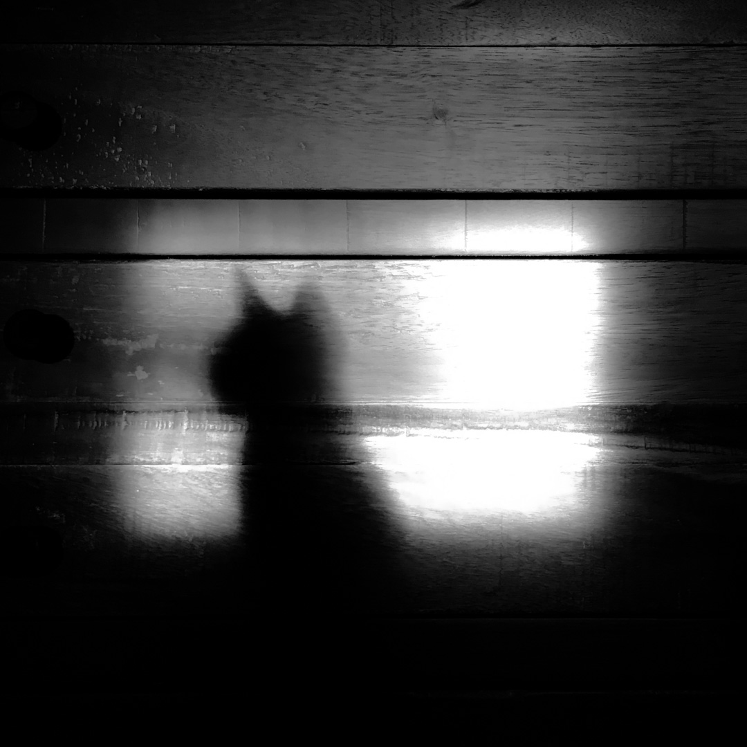 basky-shadow-2.jpg