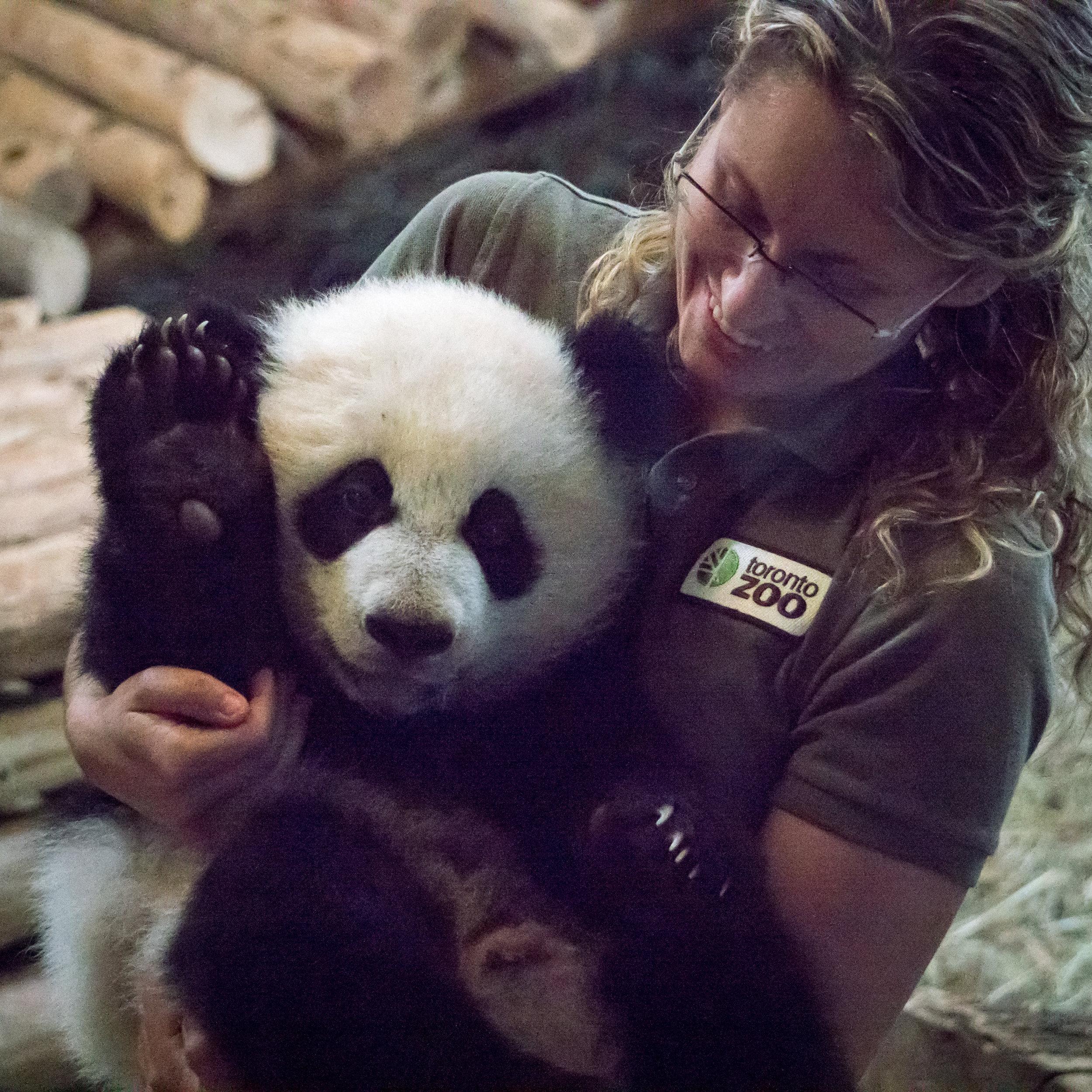 22 babby panda.jpg