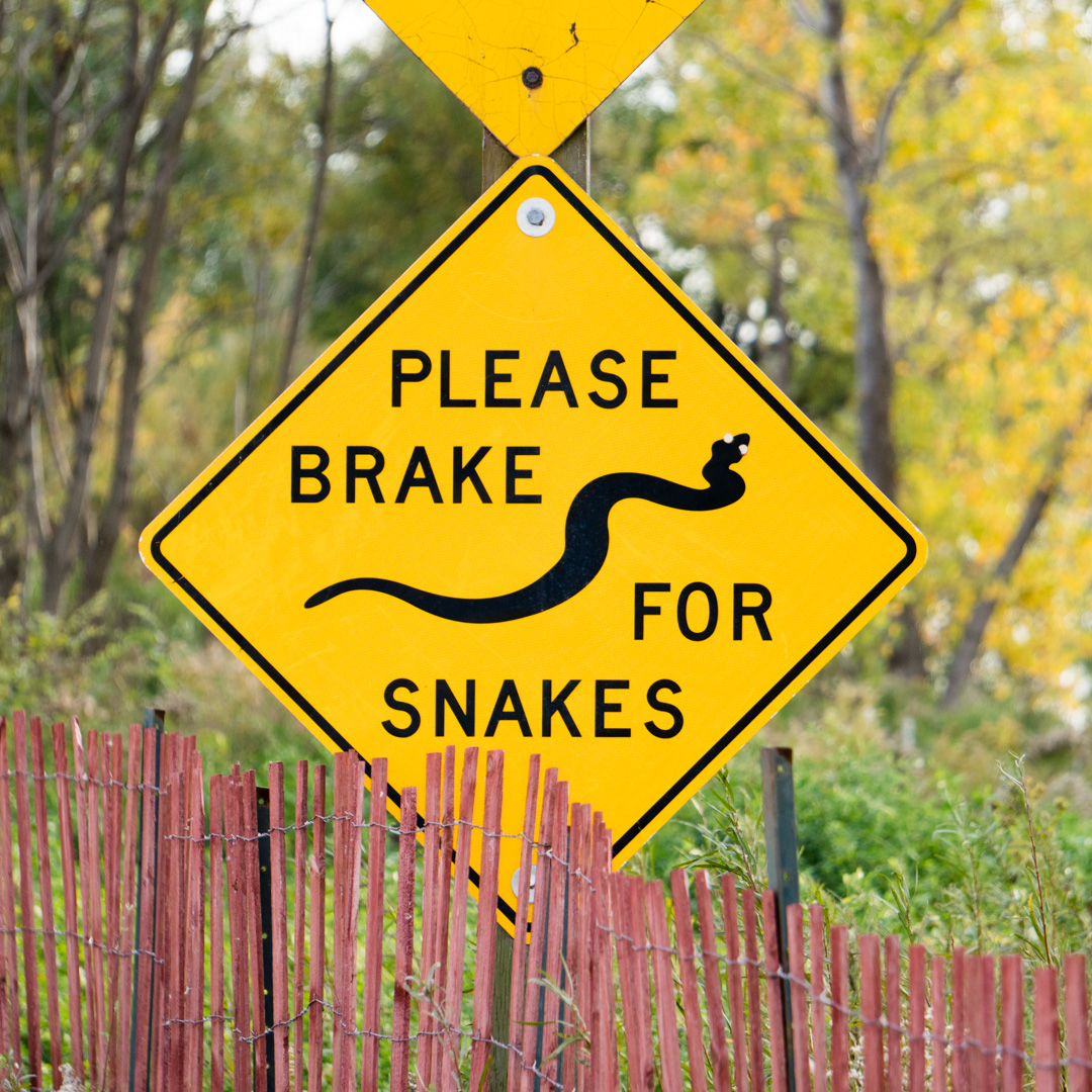 Snakes, Leslie Spit. 2016.