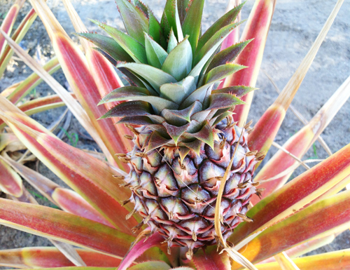 Claranandafruits1.jpg