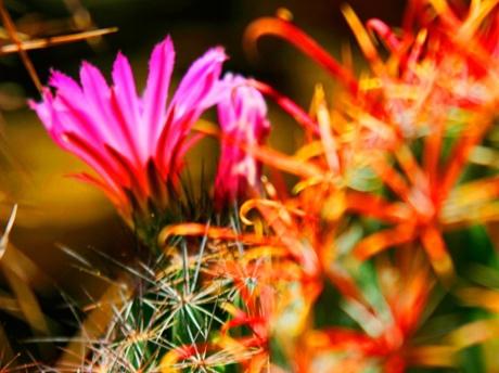 Desertcactusvb.jpg