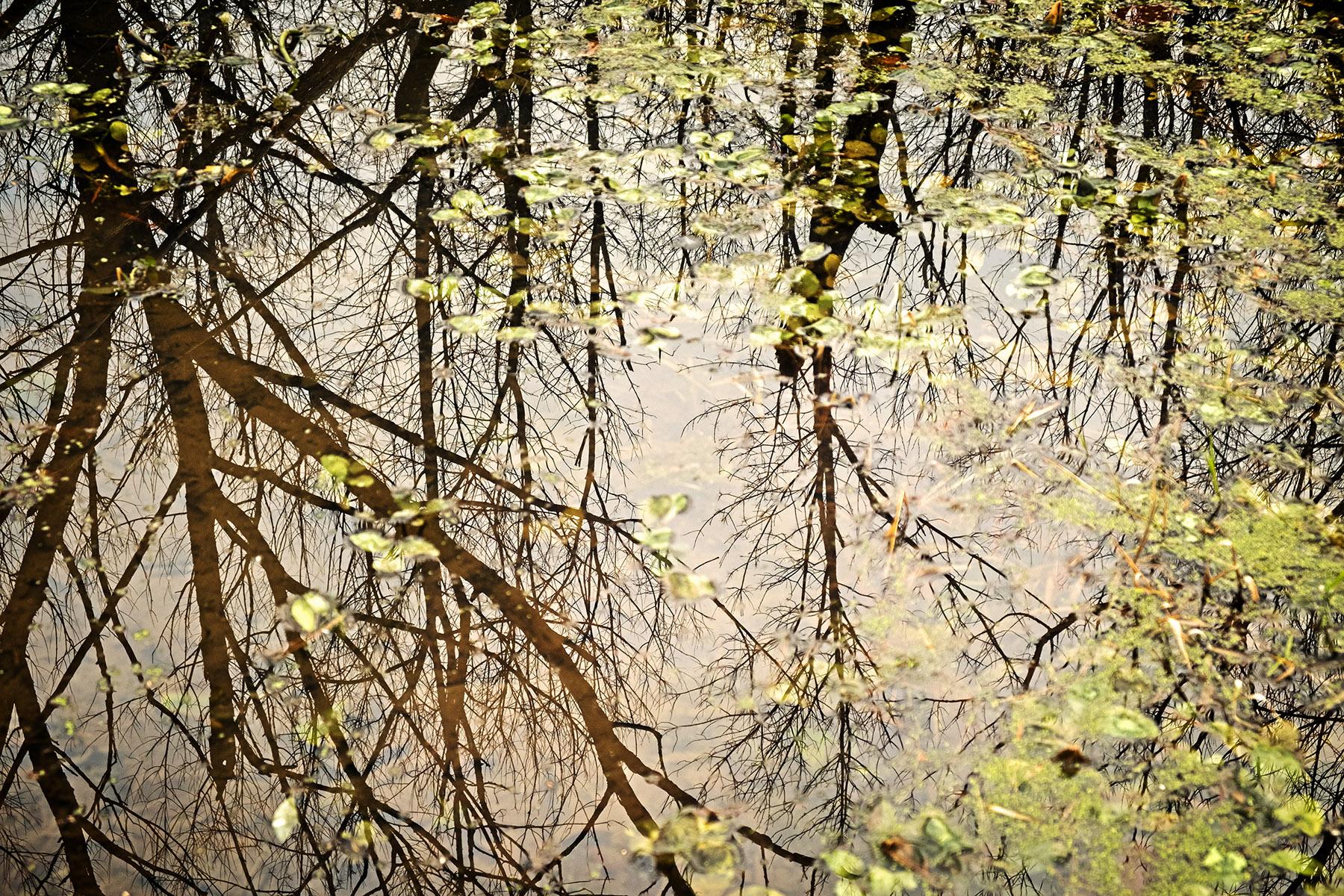 ws_naturecenter_reflection_suzanslgottshallDSCF0458.jpg
