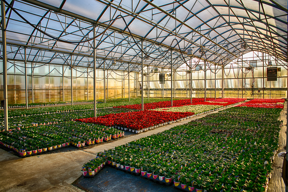 forrest hall farm flowers greenhouse-1.jpg