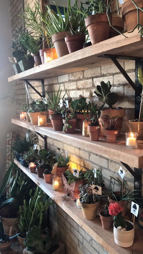 succulent display.jpg