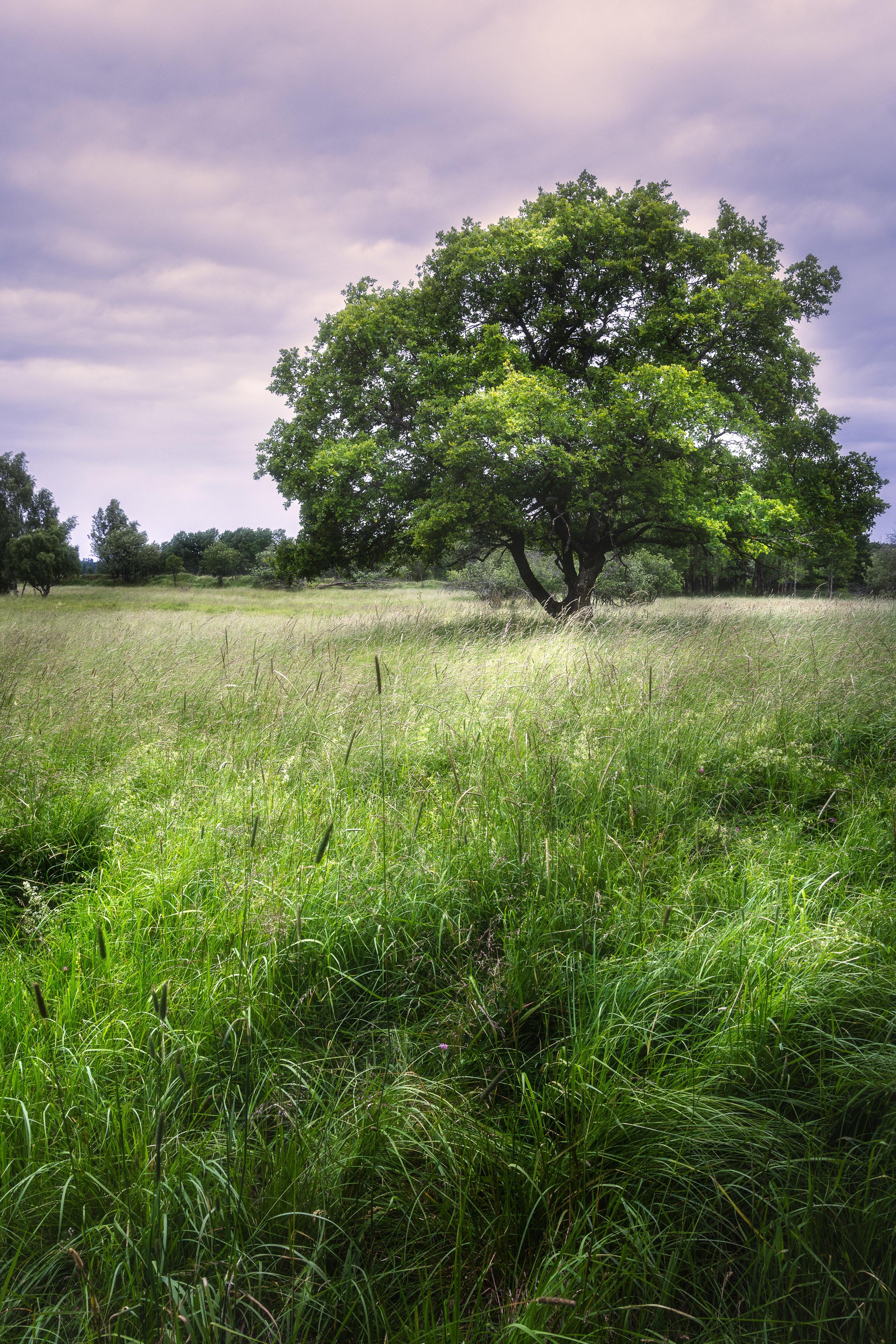 Säby Naturreservat 1706 - 079 - Web.jpg