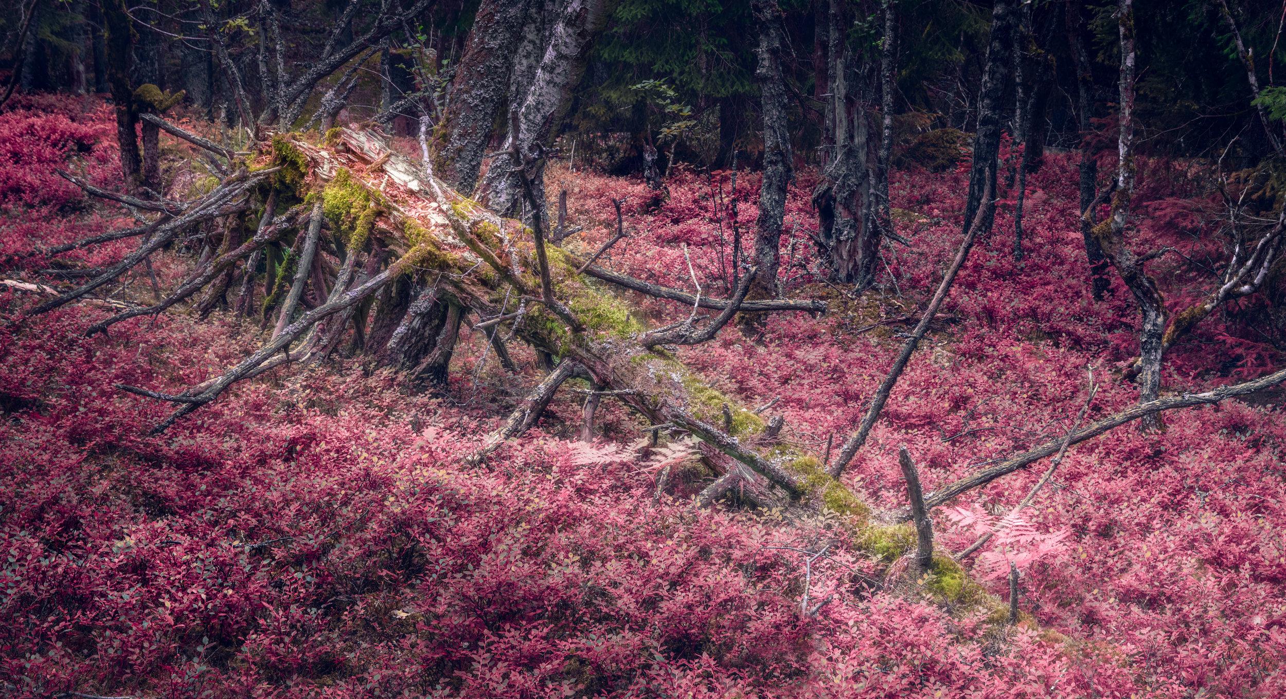 Säby Naturreservat 1706 - 086 - Web.jpg