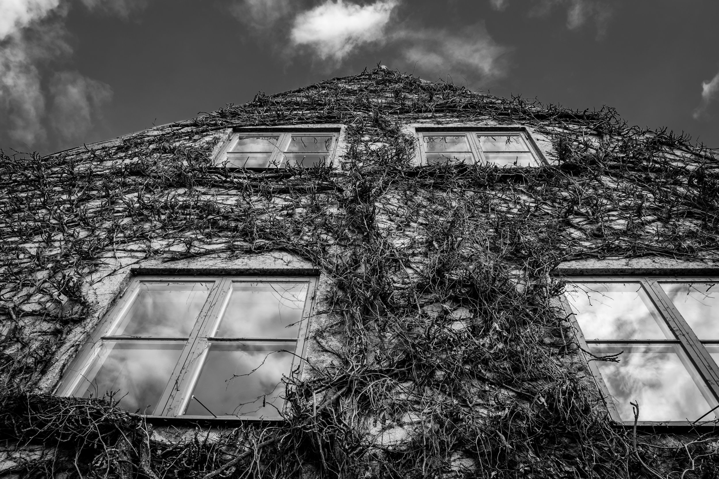 A house covered by ivy