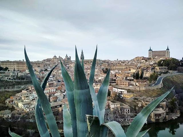 Toledo 🌵 . . . . . 📸 @joanna88michalska #toledo #view #architecture #nature #aloe
