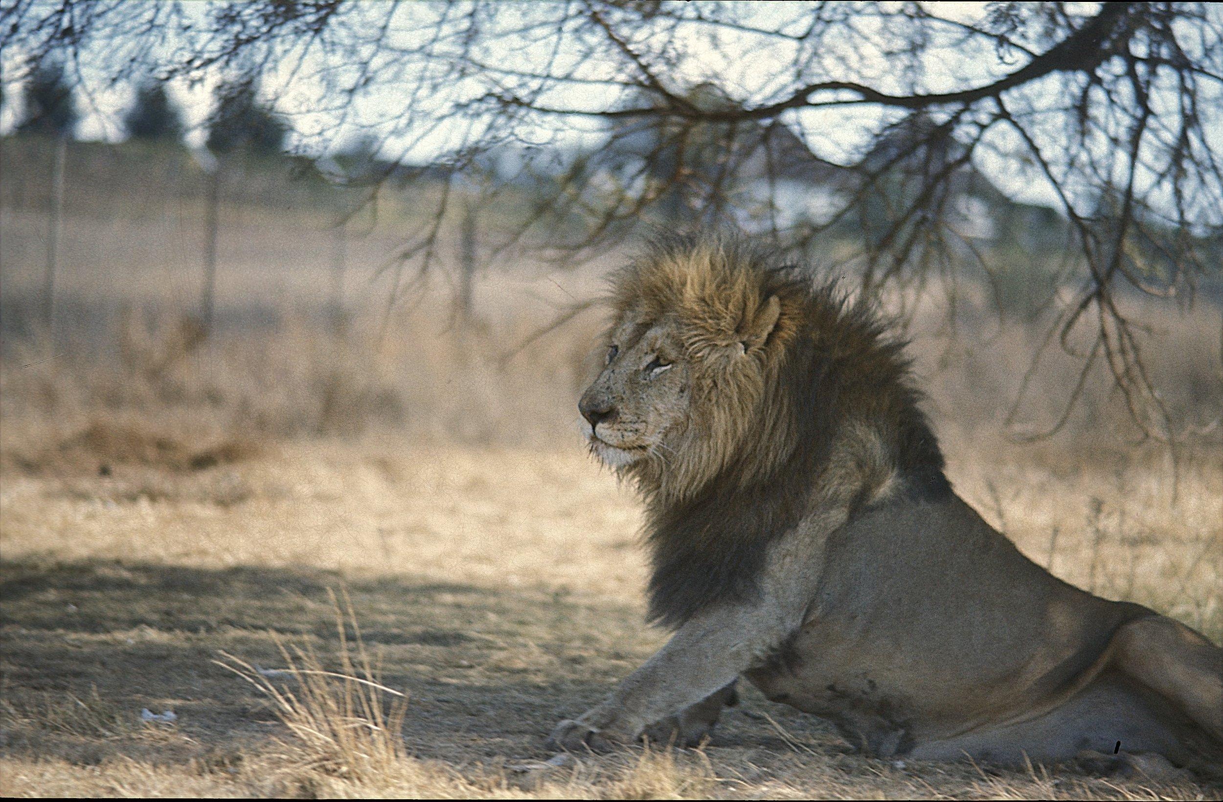 In Krugersdorp Game Reserve