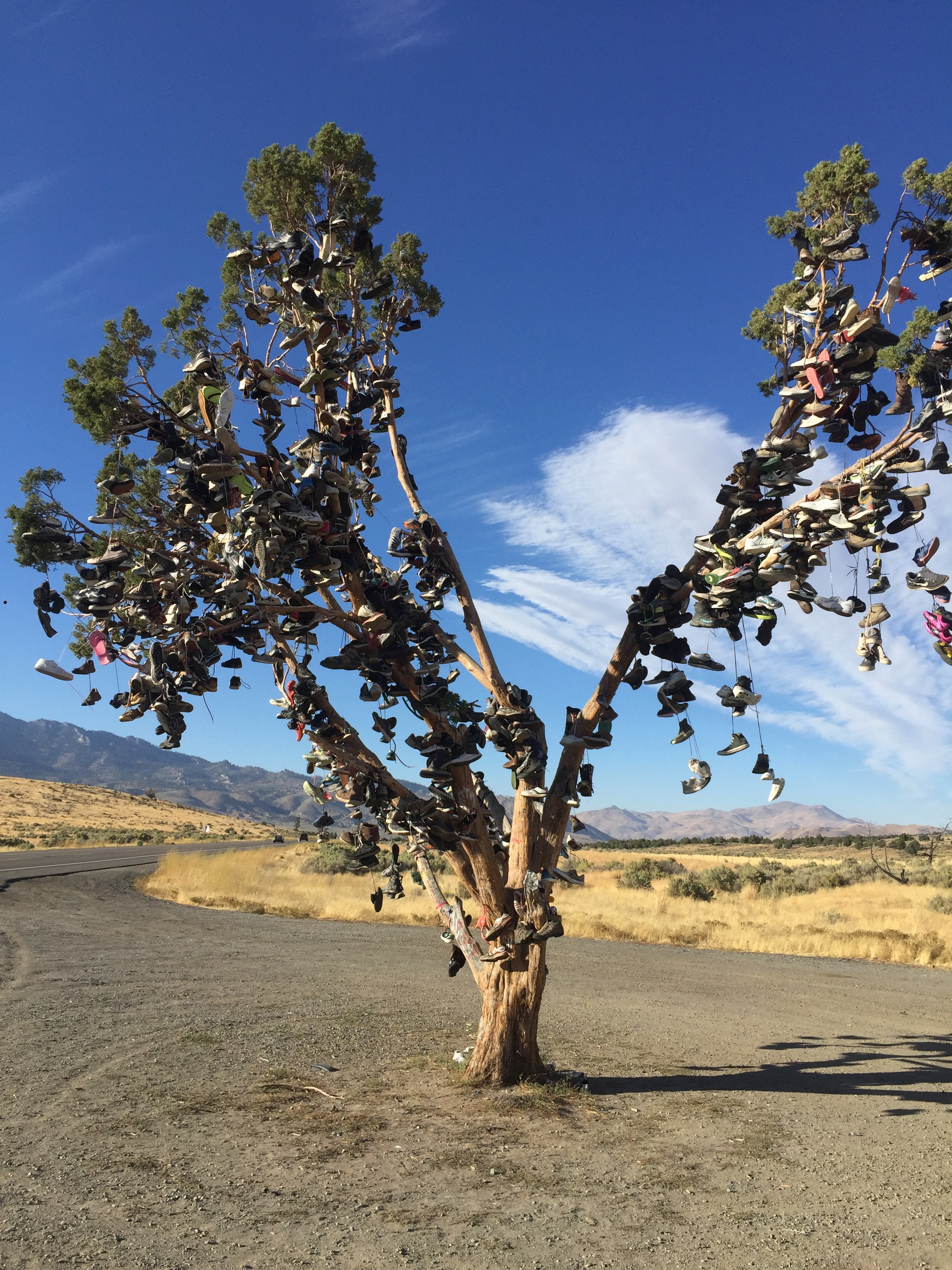 I had no idea this was a Sneaker Tree until I pulled over to park and take a quick nap. I was gobsmacked never knew such a thing existed. This is in Doyle California. One of many I'm told.