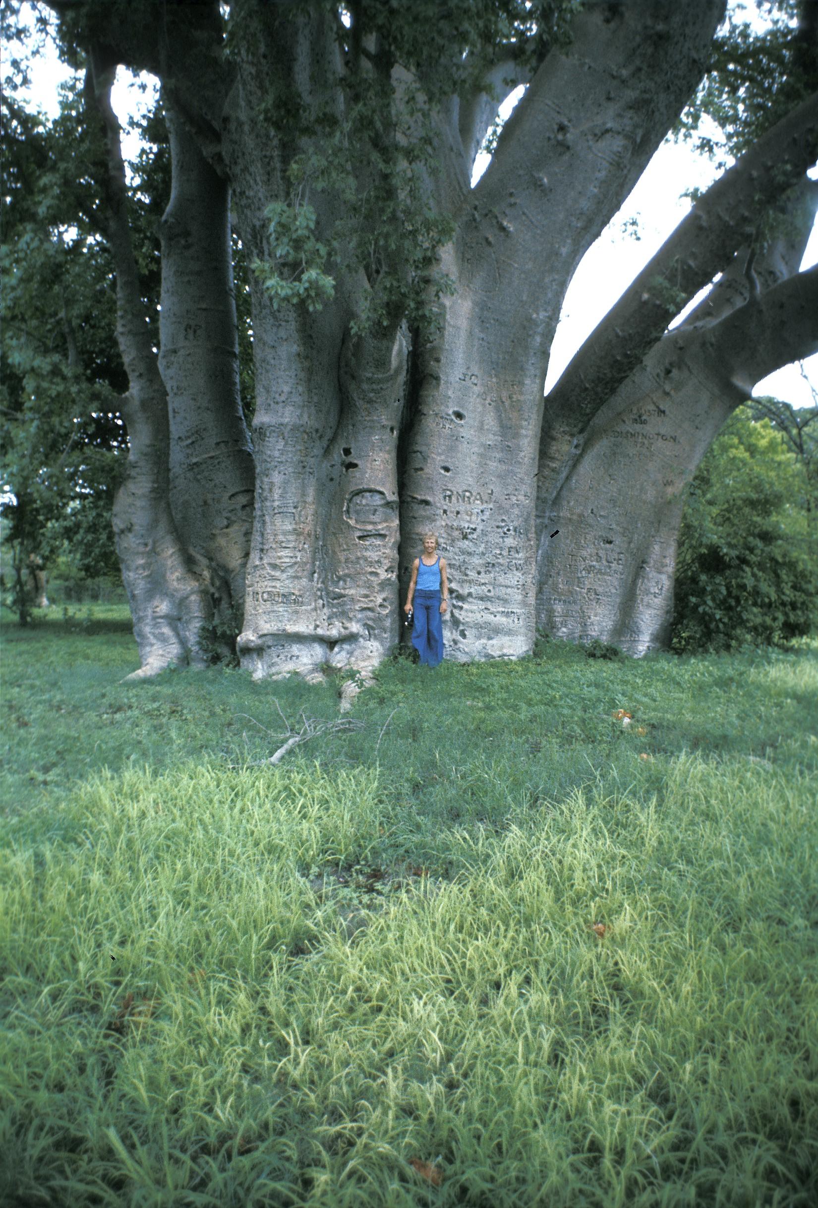 My friend Jeff under the Baobab tree.