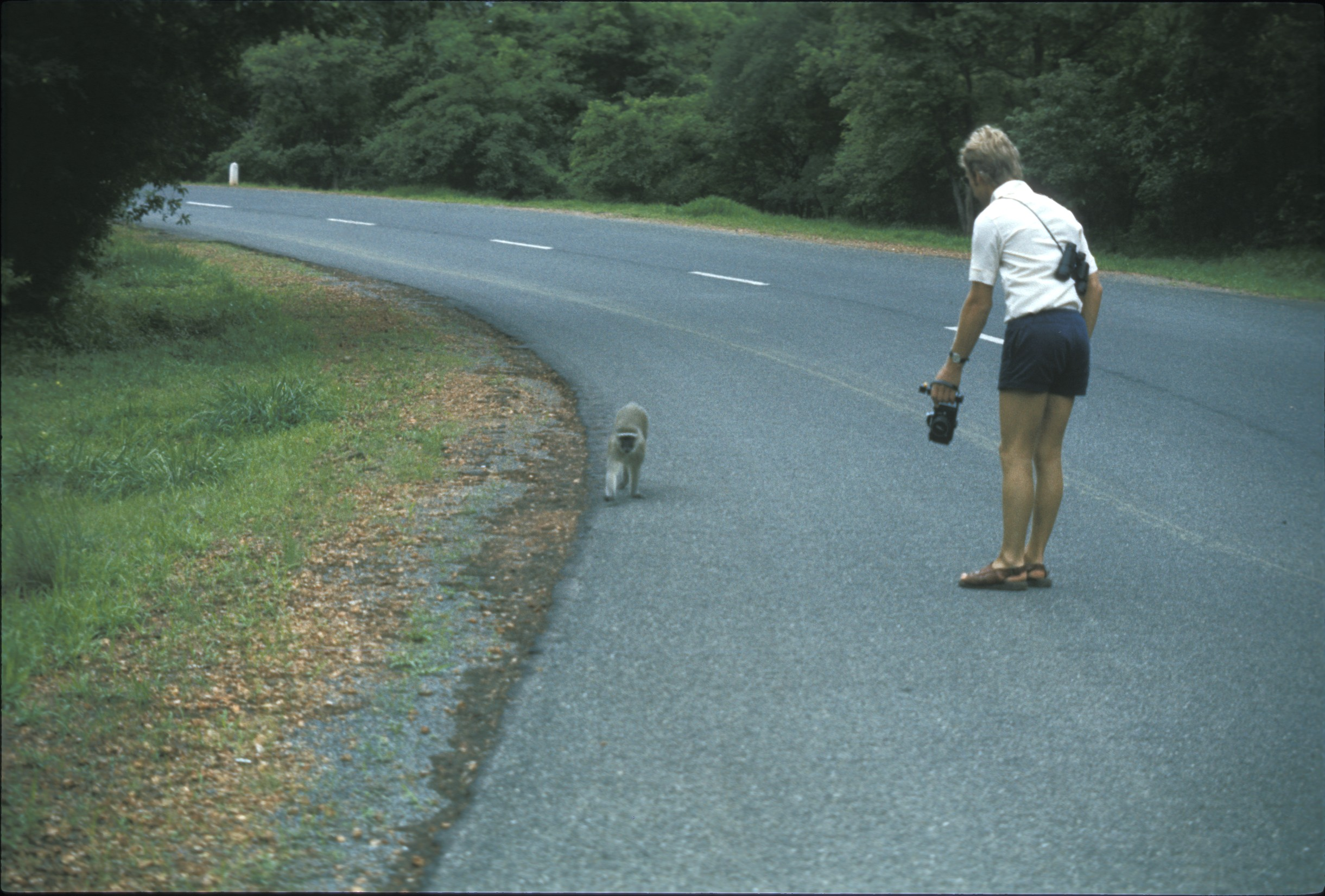 Well he was walking casually down the road! Cheeky monkey!