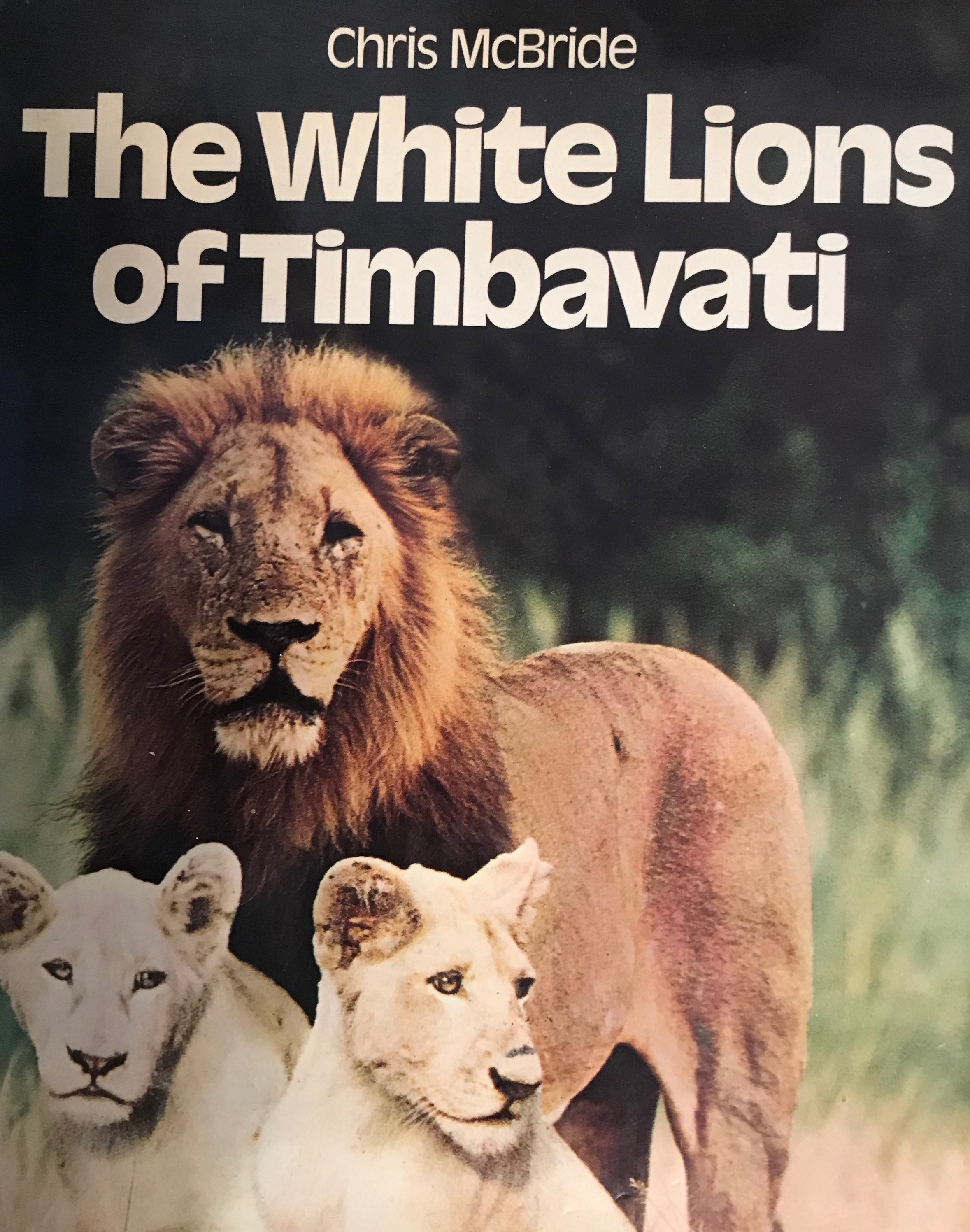 I saw these two albino lions but I can't remember where!!! They were born in 1975 exactly when I was there.