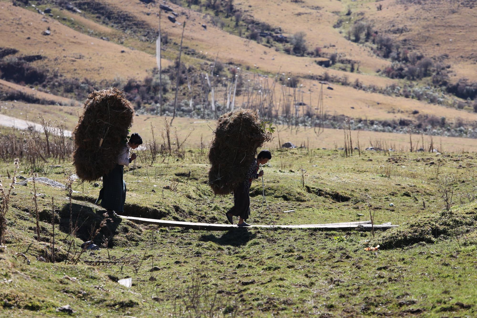 Bhutan-2016- C26O9877.jpg