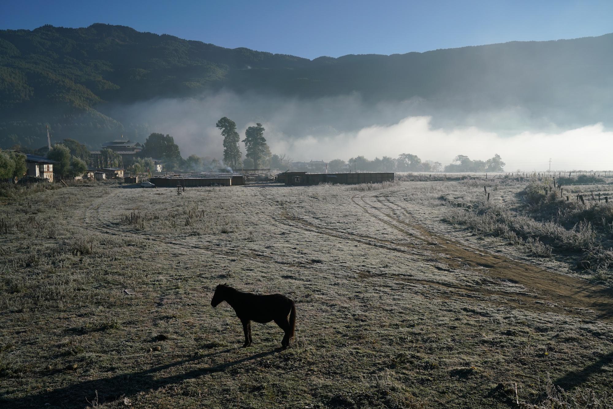 Bhutan-11-17-16- DSC03621.jpg