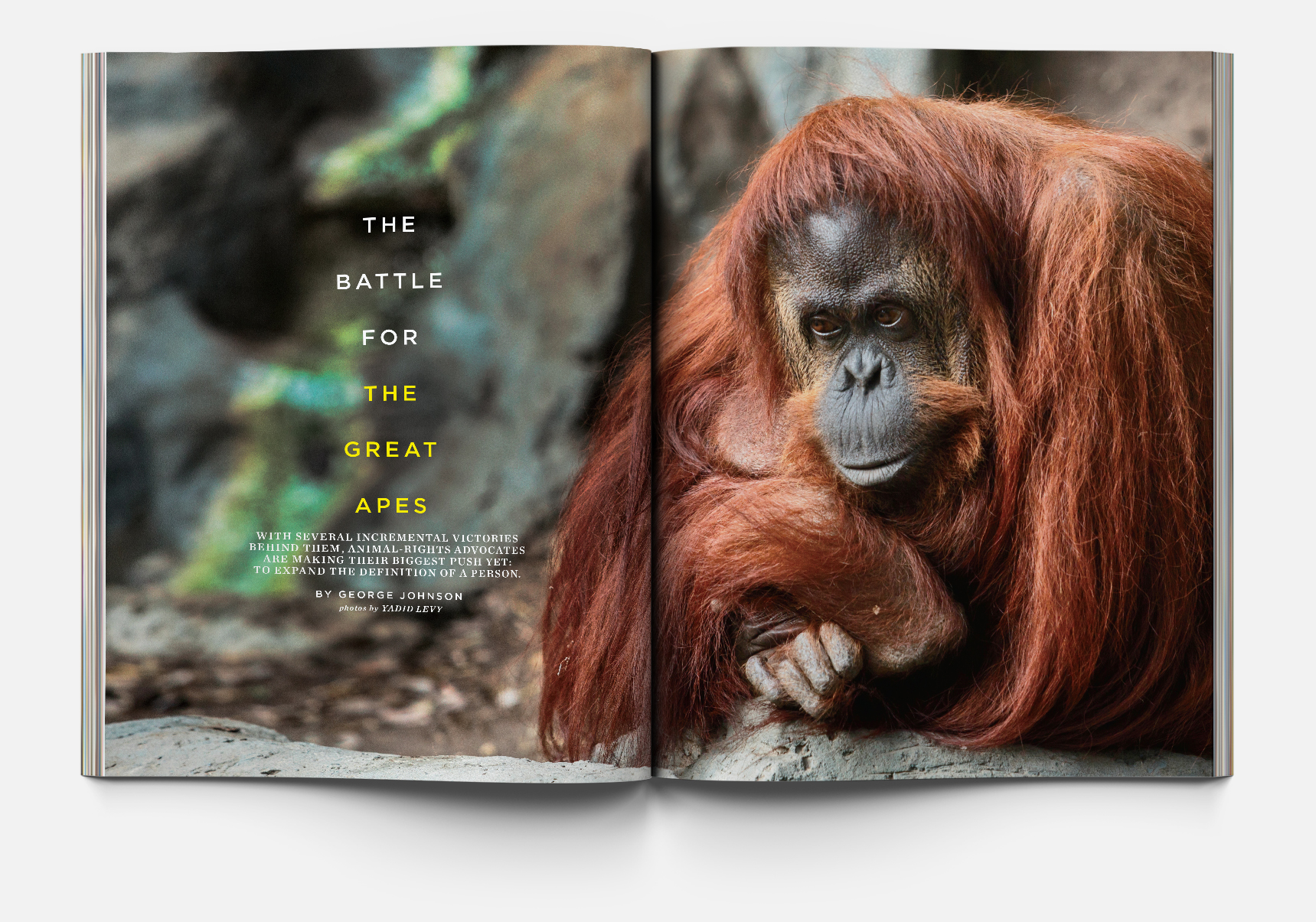 "Above:  ""The Battle for the Great Apes"", photography by:  Yadid Levy"