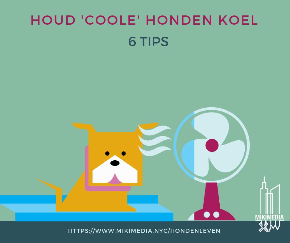 Houd 'coole' honden koel infographic - 6 Tips voor de zomer
