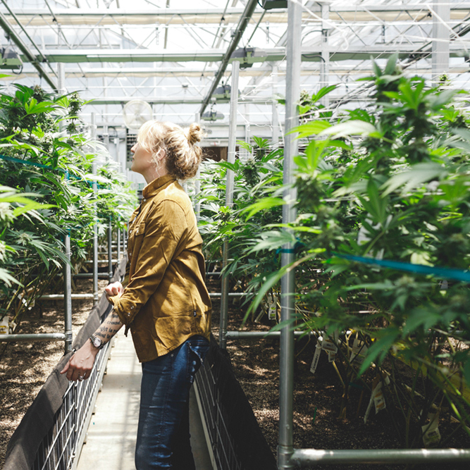 MJ LifestyleThe Shrinking Women of the Cannabis Industry - If you've ever read the comments section on any article that discusses women's lack of representation in the upper echelons of corporate America you'll quickly find that the topic triggers a knee-jerk reaction amongst the anti-affirmative action set. Read on >