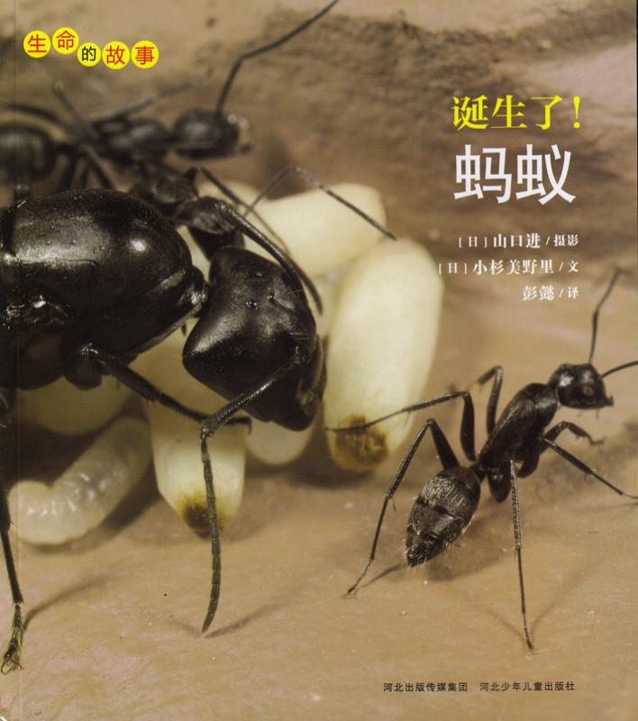 蚂蚁.jpg