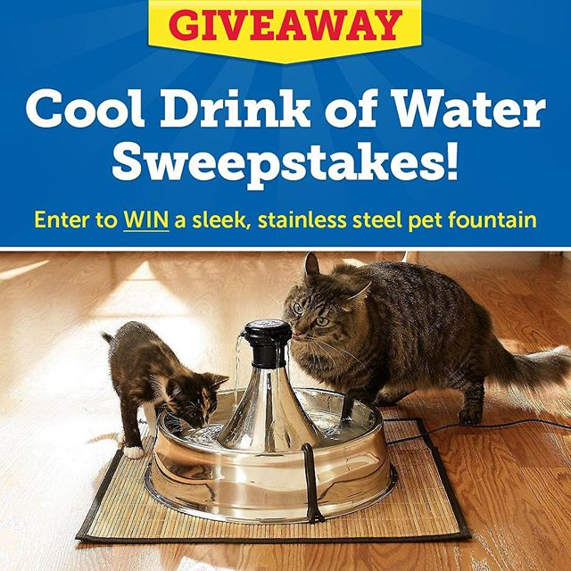 My cat @charchar.the.superstar loves her pet fountain! Before we got one for her, she barely drank water, which is a common issue for cats. Now she gets refreshing, filtered, circulating water that she loves to drink.  Click the link in my bio to enter the @1800PetMeds Cool Drink of Water Sweepstakes for a chance to WIN a sleek, stainless-steel pet fountain. FOUR winners! (Deadline to enter is July 28th). #hbtcooldrinkofwater #hbtsp