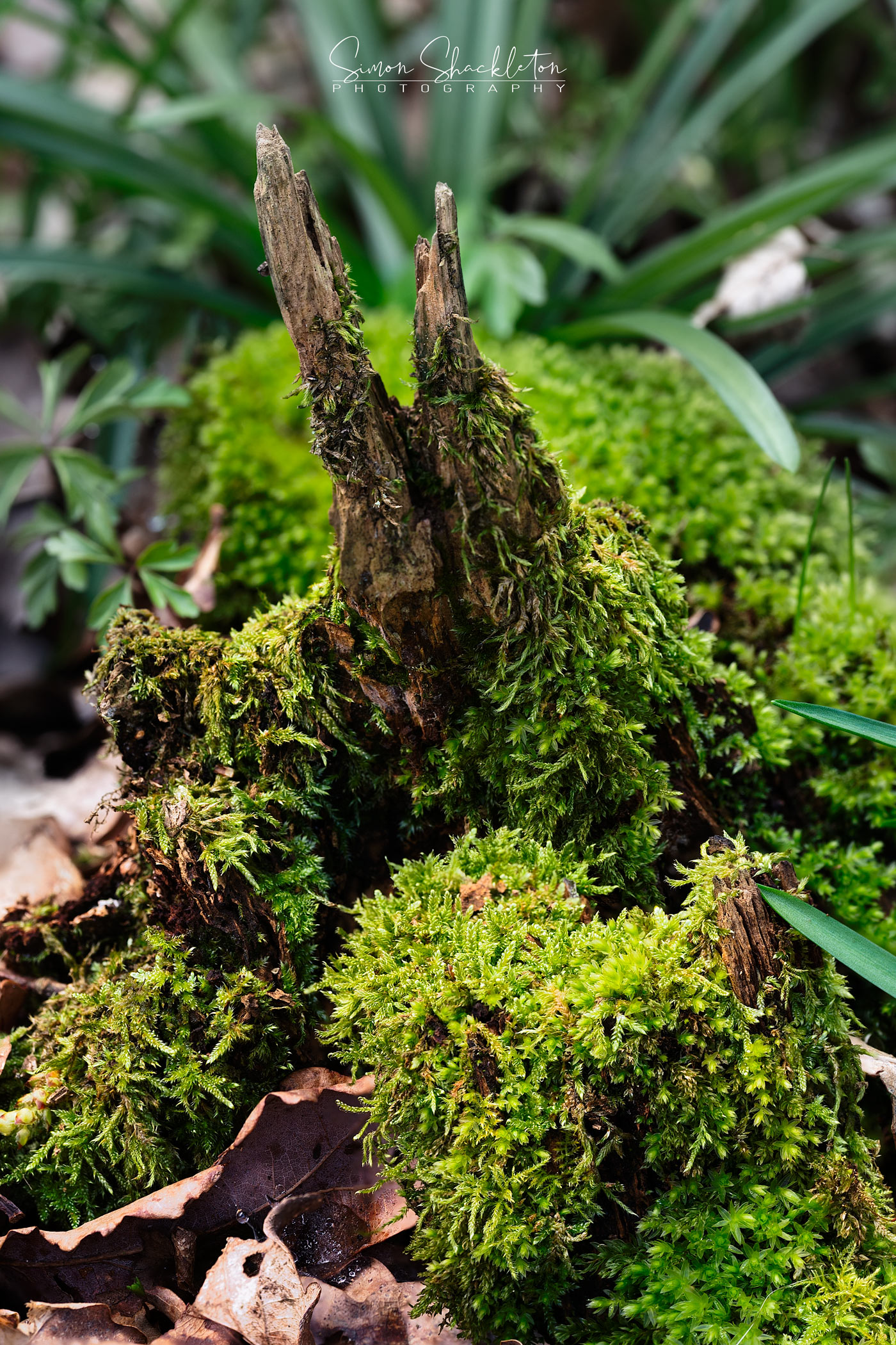 A perfect miniature ecosystem, in the woods.