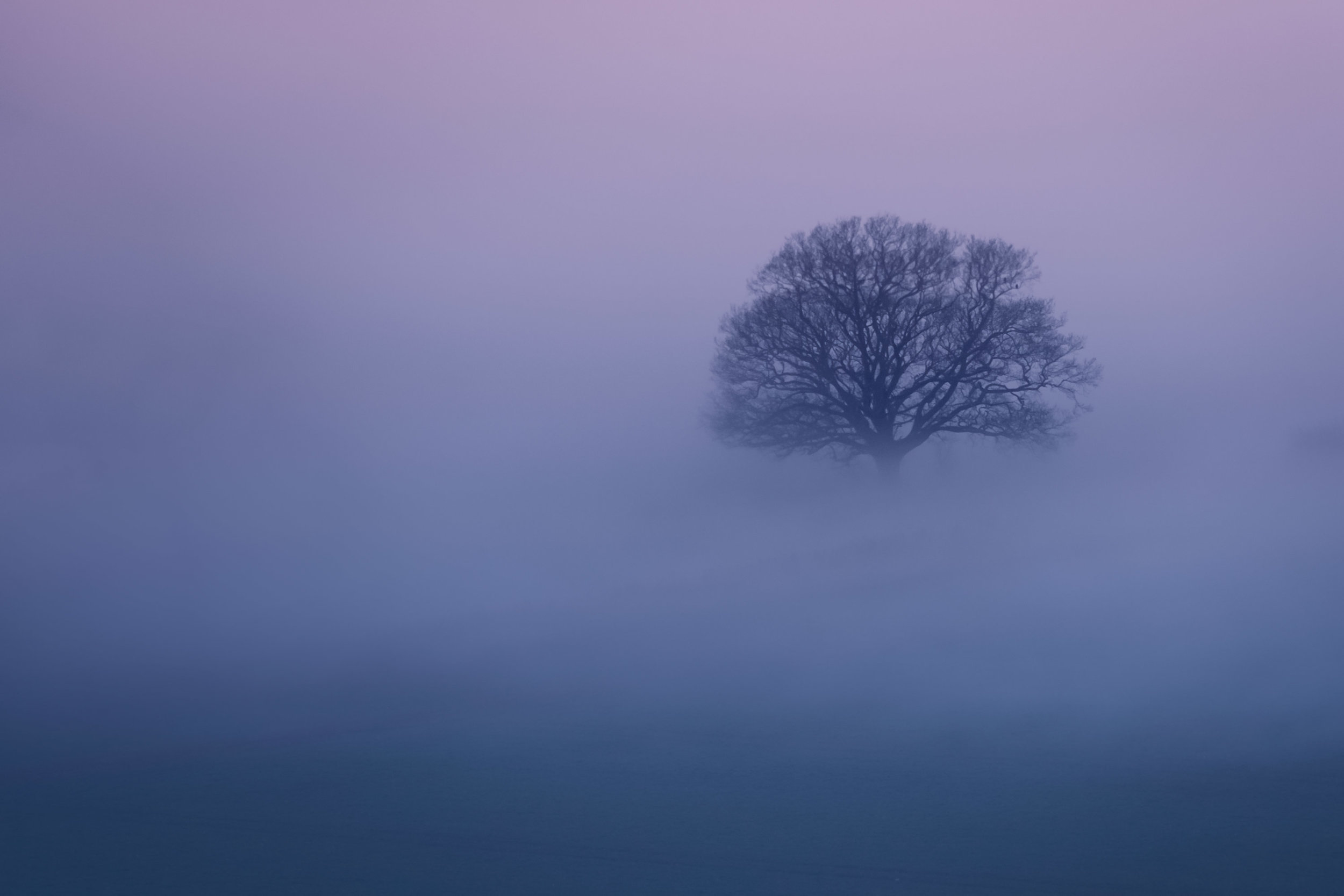 2019.02.28-The-Distant-Misty-Tree-32-WEB.jpg