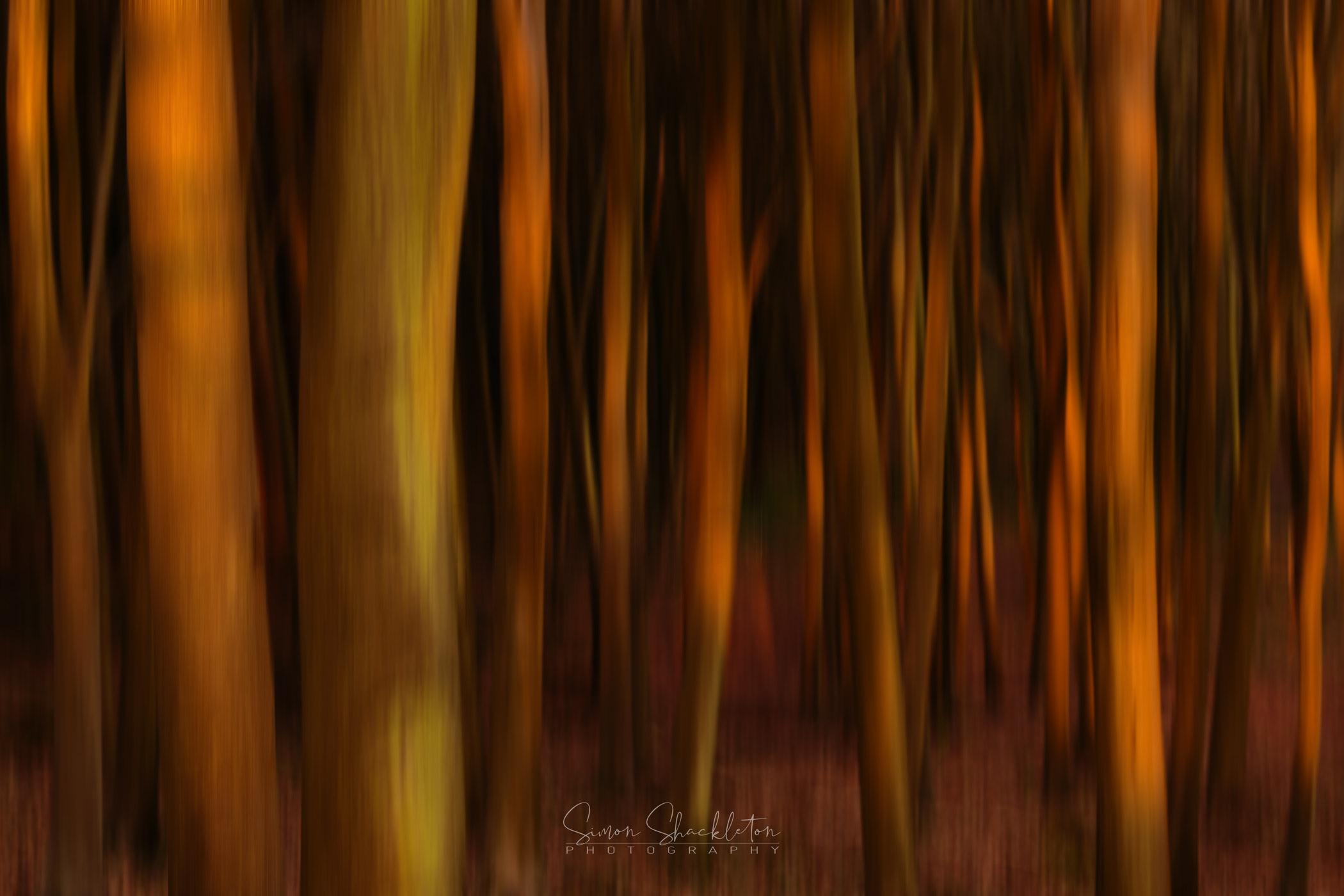 A woodland awakening.