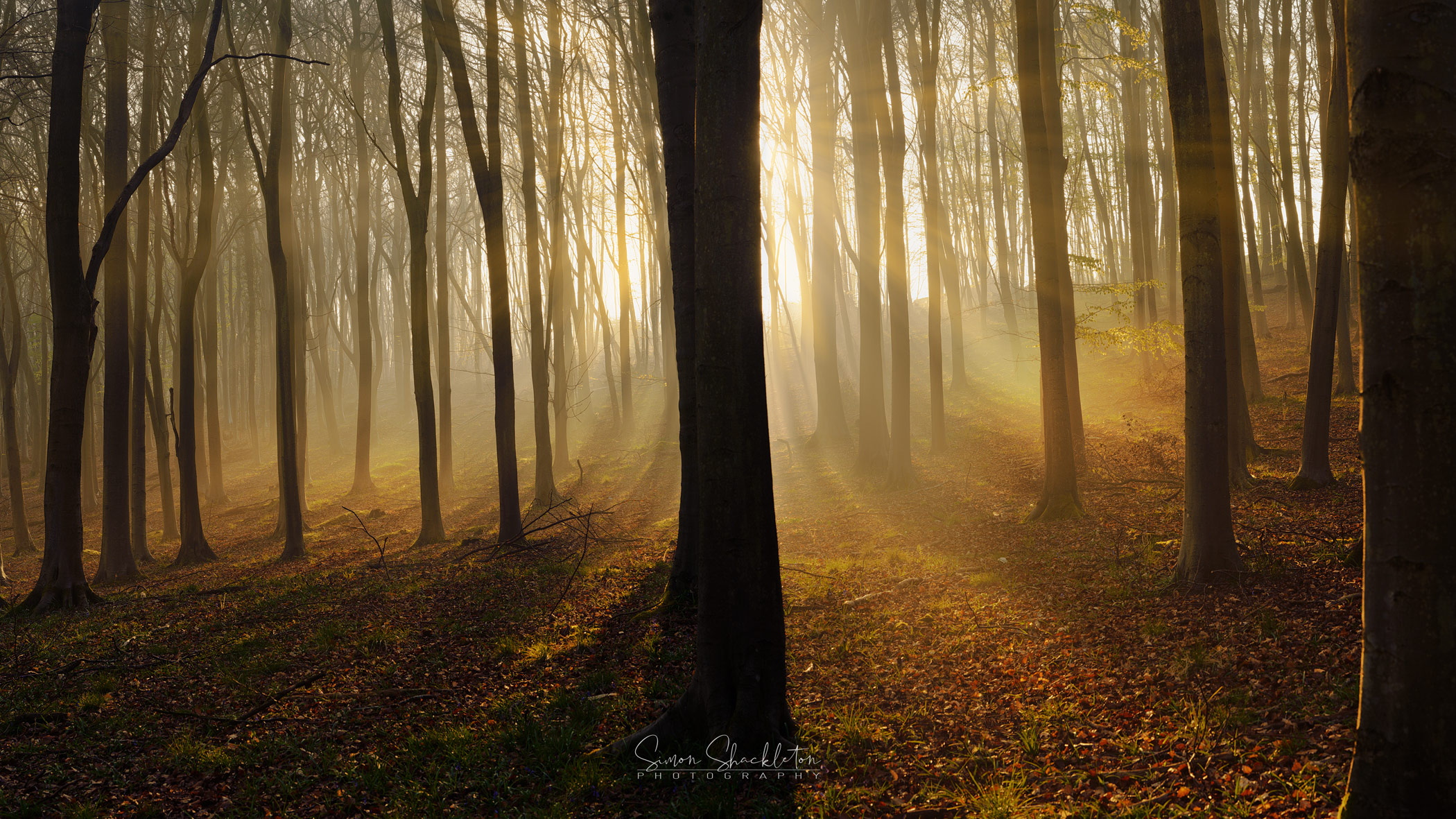 Warm dawn rays in a Kentish woodland.
