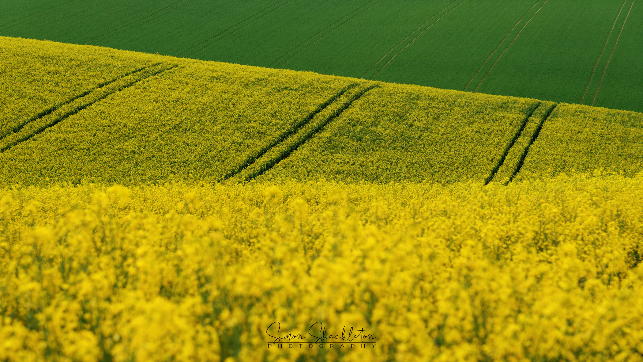 Rapeseed abstract, North Downs, Kent.
