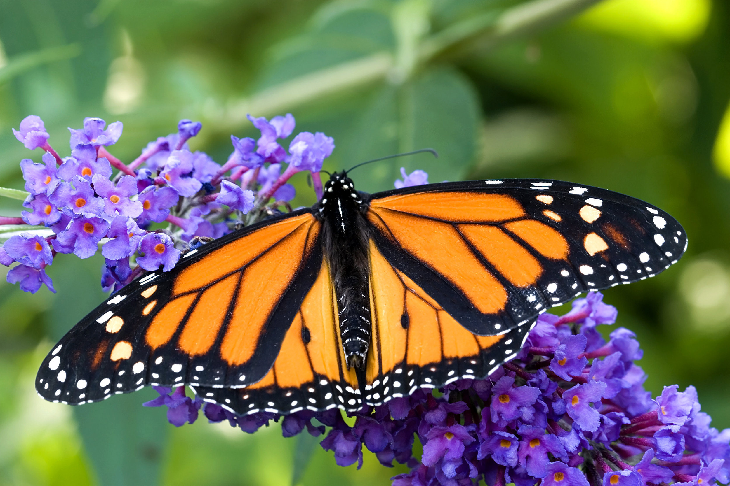 art-for-pollinator-gardens-workshop.jpg