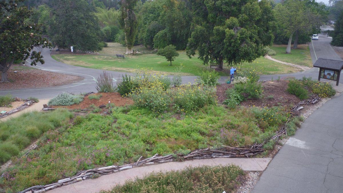 Hugelkultur at The Crescent Farm at the LA County Arboretum. Photo courtesy of Shawn Maestretti.