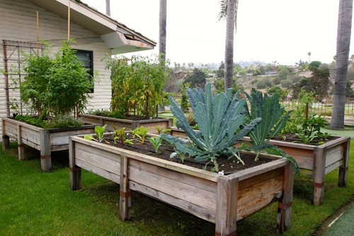 These raised beds are right outside the patio which makes them so convenient to harvest.