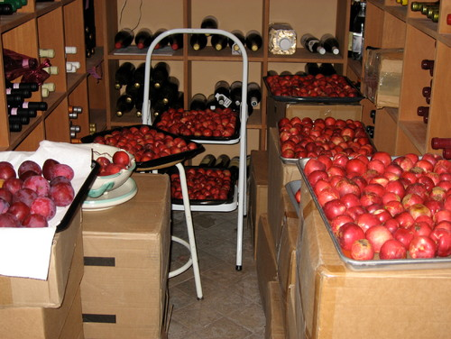 Just harvested Arctic Star nectarines, Santa Rosa plums, and Maypride peaches.