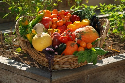 This basket is brimming with just-harvested vegetables and nutrition. It looks too good to eat.