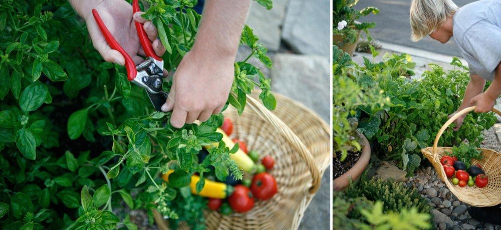 paseo-tranquillo-03-basil-gardening.jpg