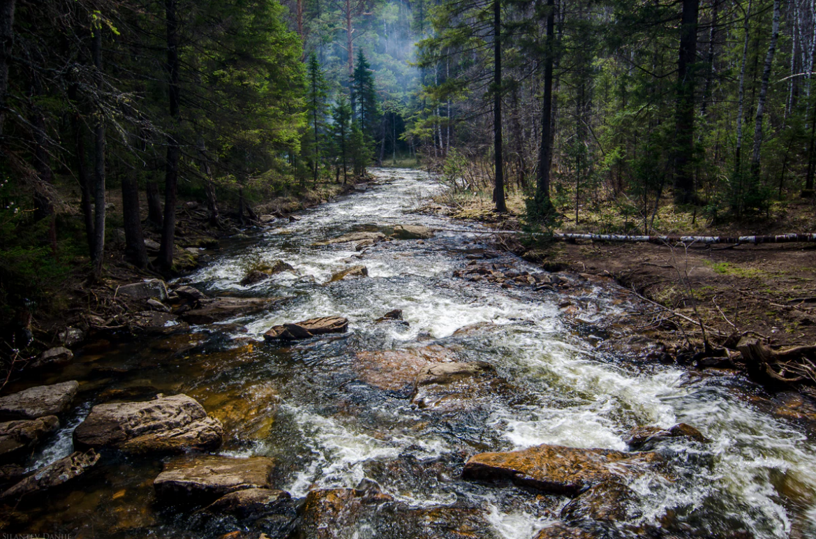 49e56-forest-riverforest-river.png