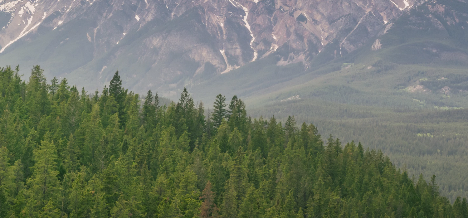 7fa84-forest-mountainforest-mountain.png