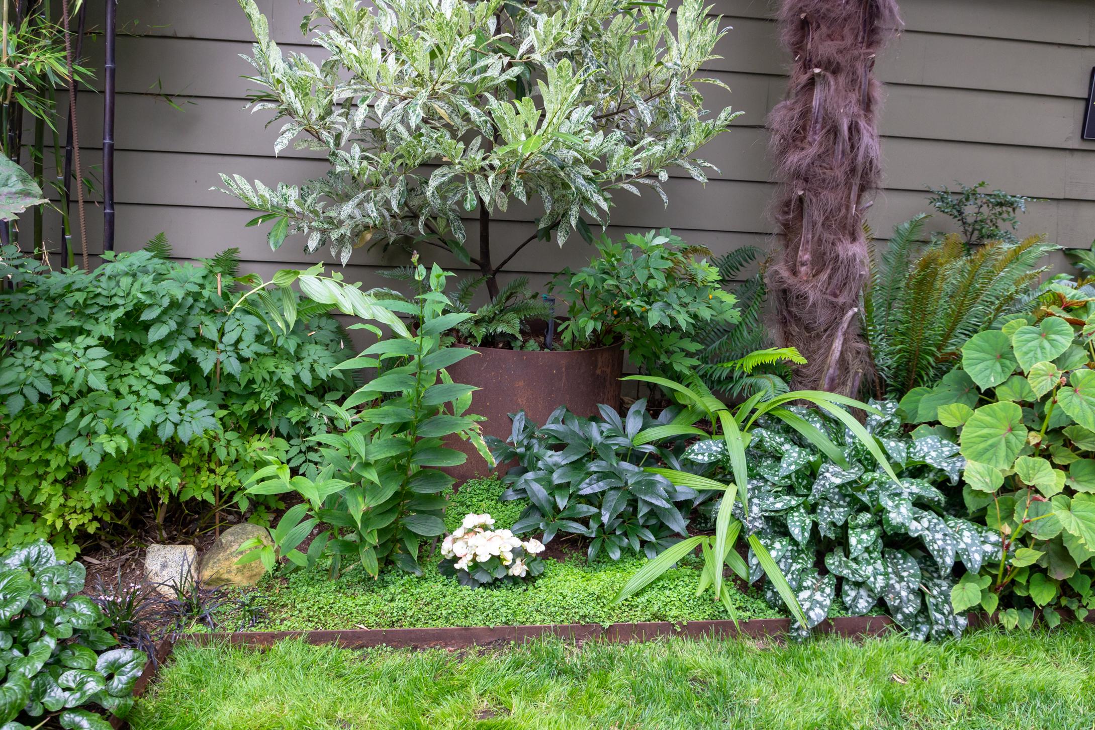 Garden #8