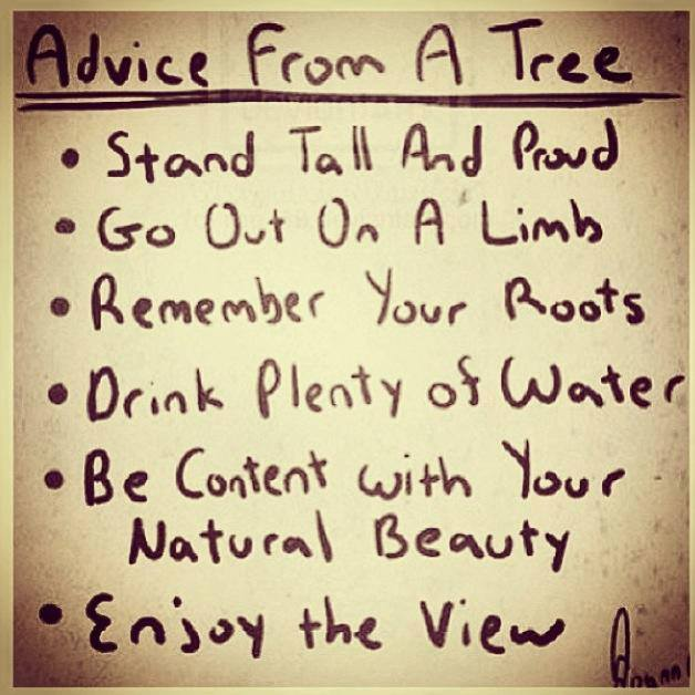 advice from a tree.jpg
