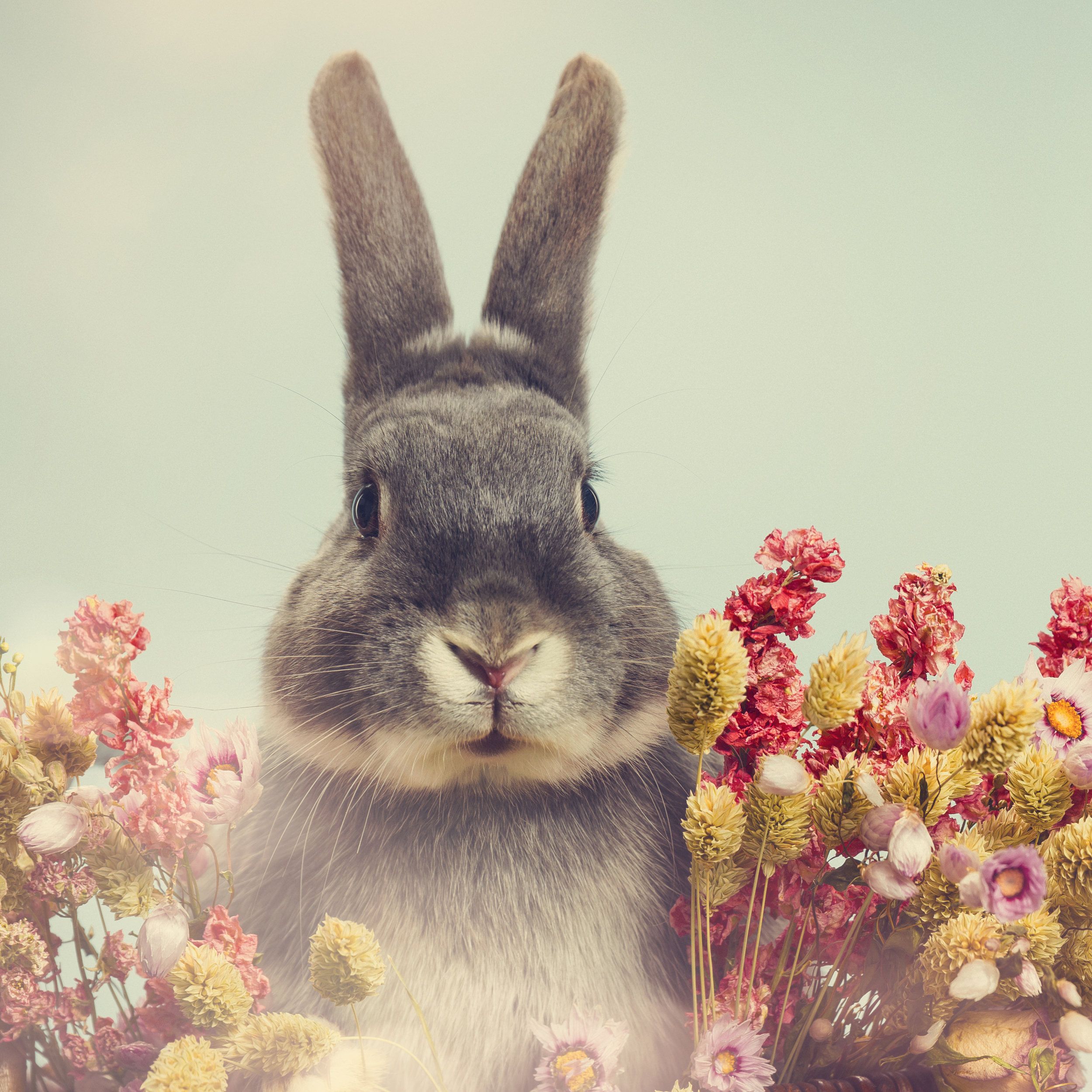 Cruelty Free   TRUE Skincare products have not, and never will be, tested on animals. We are proud to be a Leaping Bunny approved brand by Cruelty Free International.