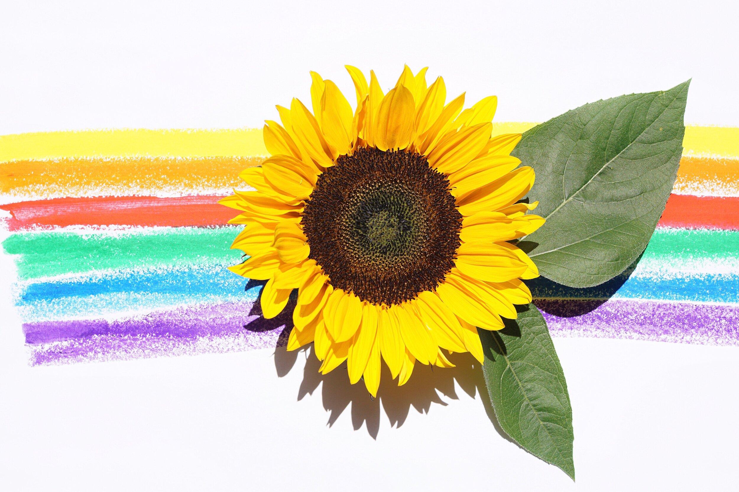 Sunflower Seed Oil