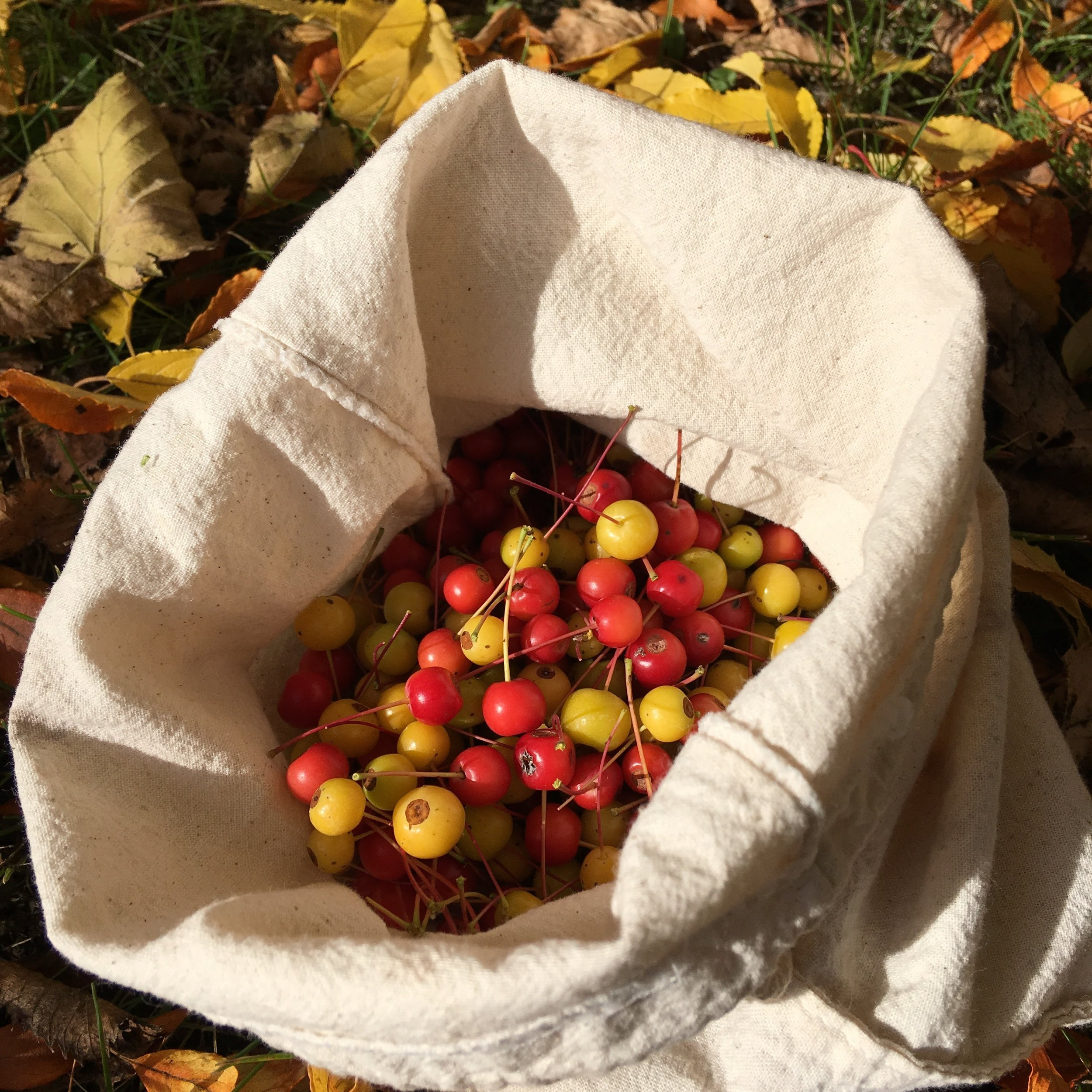 A pretty harvest of crab apples.
